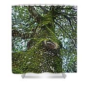 Green Arms Shower Curtain