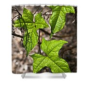 Green Arrowheads Shower Curtain