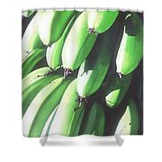 Green Bananas I Shower Curtain