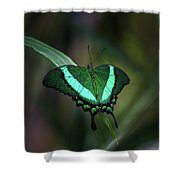 Green-banded Peacock- 2 Shower Curtain
