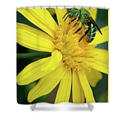 Green Bee On Yellow Daisy Shower Curtain