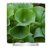 Green Bells Shower Curtain
