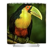 Green-billed Toucan Perched On Branch In Jungle Shower Curtain