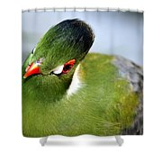 Green Bird Shower Curtain