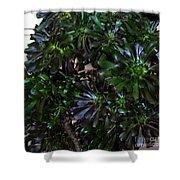 Green-black Cucculent Plant. Big Bush Shower Curtain