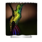 Green Breasted Mango Hummingbird Shower Curtain