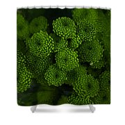 Green Brothers Shower Curtain