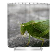 Green Bug Shower Curtain