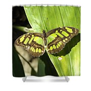 Green Butterfly Shower Curtain