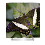 Green Butterfly Shower Curtain