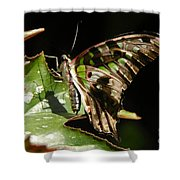 Green Checkered Skipper Shower Curtain