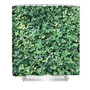 Green Clovers Shower Curtain
