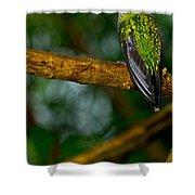 Green-crowned Brilliant Hummingbird Shower Curtain