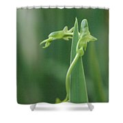 Green Dragon Shower Curtain