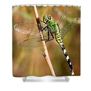 Green Dragonfly Closeup Shower Curtain