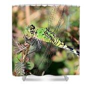 Green Dragonfly Macro Shower Curtain