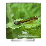 Green Dragonfly On Leaf Shower Curtain