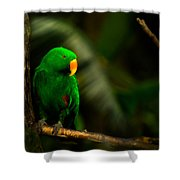 Green Eclectus Parrot Male Shower Curtain