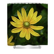 Green Eyed Daisy Shower Curtain