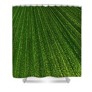 Green Fan - Radiating Lines And Scattered Polka-dots Shower Curtain