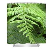 Green Fern 2 Shower Curtain