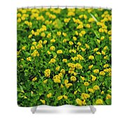 Green Field Of Yellow Flowers 1 Shower Curtain