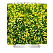 Green Field Of Yellow Flowers 2 1 Shower Curtain