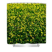 Green Field Of Yellow Flowers 3 Shower Curtain