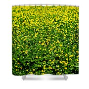 Green Field Of Yellow Flowers Shower Curtain