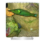 Green Fish Shower Curtain