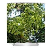 Green Fizalis Plant Shower Curtain