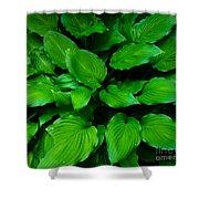 Green Foliage Shower Curtain