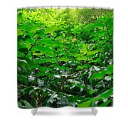 Green Foliage Shower Curtain
