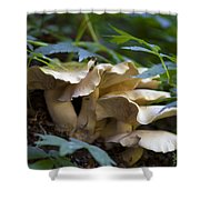 Green Forest Floor Shower Curtain by Barbara Schultheis