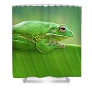 Green Frog Whitelips Shower Curtain
