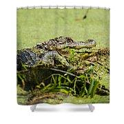Green Gator Shower Curtain