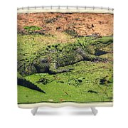 Green Gator With Border Shower Curtain