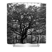 Green Giant In Black And White Shower Curtain