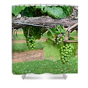 Green Grapes Shower Curtain