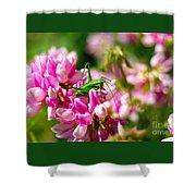 Green Grasshopper On Pink Flowers Shower Curtain