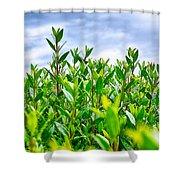 Green Hedge Shower Curtain