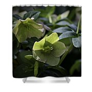 Green Hellebore Squared Shower Curtain