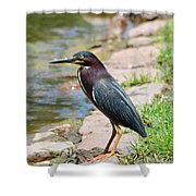 Green Heron-1 Shower Curtain