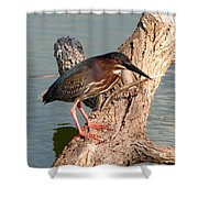 Green Heron 1 Shower Curtain