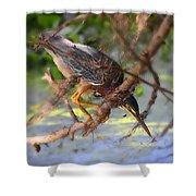 Green Heron Brazos Bend State Park Shower Curtain