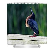 Green Heron Calling Softly In The Early Morning Shower Curtain