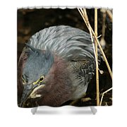 Green Heron Hunting Shower Curtain