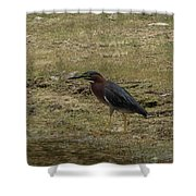 Green Heron In Central Texas Shower Curtain