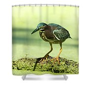 Green Heron In Green Algae Shower Curtain