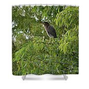 Green Heron In Tree Shower Curtain